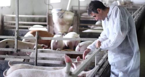 媒体:全国多地现非洲猪瘟疫情