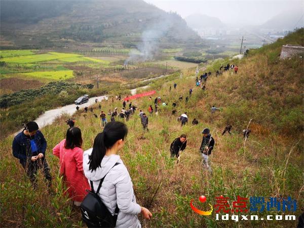 义龙新区郑屯镇组织人大代表开展植树活动