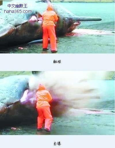 丹麦一头死亡抹香鲸突然爆炸 只剩皮囊