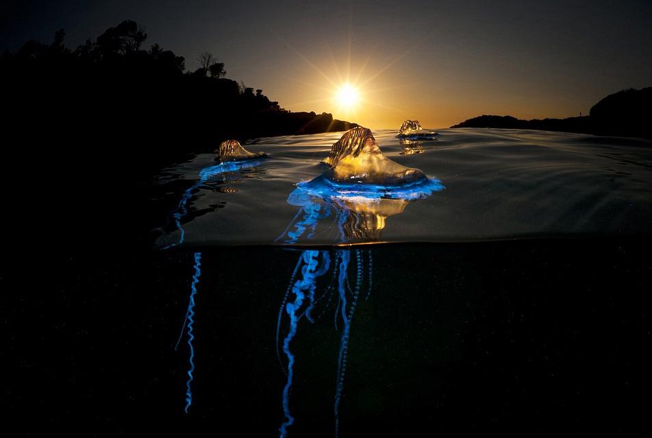 英国摄影师冒险拍摄海洋致命水母神秘光彩