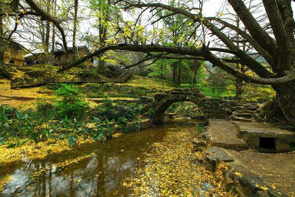 妥乐古银杏风景区处在盘县古银杏风景名胜区的中心