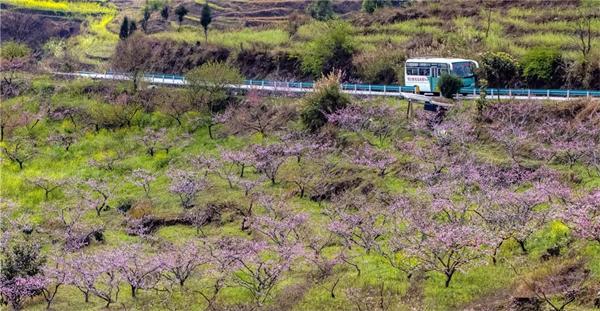 兴仁马金河景区:姹紫嫣红喜迎春 游乐增收群众喜