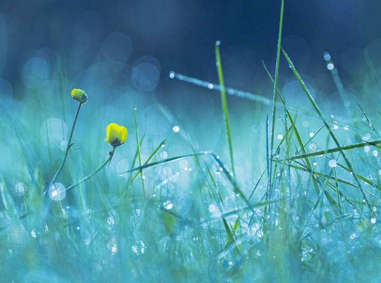 网络配图。 听 雨 作者:溱梓程 夜晚,寝室外淅淅沥沥的下起了大雨。抹去了白天火辣辣的太阳,心情的燥热也被冷风浇灭了。残肴的梦,像雨珠落在老树新叶上跳起的舞蹈,充满了忐忑。    枕在床头,听着忽远忽近的雨声,大脑似在风雨声中努力斑驳着生命的色彩。可惜生活的平淡无奇,也注定了心如止水的人生,无以改变其一尘不变的态度。每天细数着时间从指尖流过,感慨着满天的星光从未停止闪烁。时光改变了事物之间存在的变换,更迭着虚无与真实之间的空洞。岁月迷幻着琐碎零星的纠葛,演变成麻木与无情,从而拉扯着人性的担忧与恐惧。