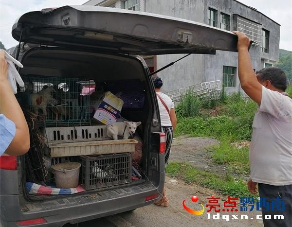 兴仁:人与鸡鸭鸽兔狗等共乘面包车 交警依法查处