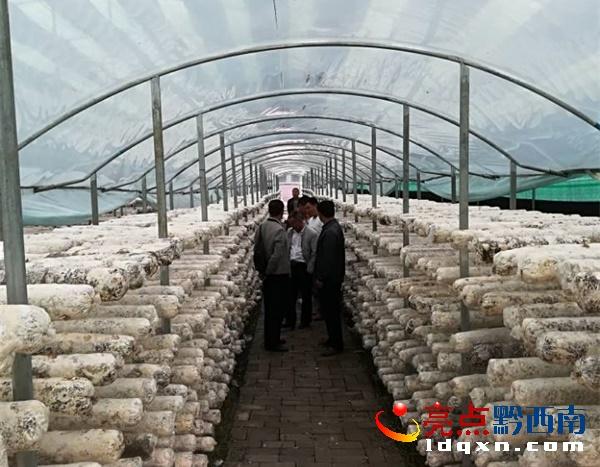 安龙普坪:新模式做大做强食用菌产业