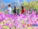 兴义后花园:花娇草艳叶儿红  吸引游客拍拍拍(图)