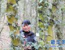 """贵州安龙:石斛""""上树""""收""""黄金"""""""