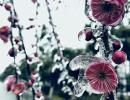 """黔西南迎来凝冻天气 植物结起串串""""冰雕"""" 美!"""