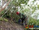澳门葡京在线娱乐平台县弼佑镇建设低产林改造示范基地 投入资金168万元