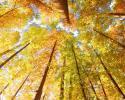 兴西湖生长着一片珍贵水杉 水杉非常珍贵被称为植物界的大熊猫
