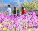 兴义后花园:花娇草艳叶儿红 吸引游客拍拍拍!