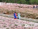 清明期间,贵州接待游客1366万人次 实现旅游收入71.78亿
