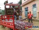 义龙新区德卧2000亩山地生态甘蔗 助农增收1500万元