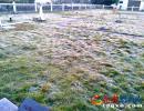 安龙地面温度破0℃现初霜