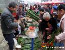 义龙新区德卧山地生态粑粑叶热销 每把1.5-2.5元