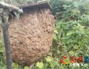 墙忠元到兴义乌沙老土甲、胡蜂养殖基地考察